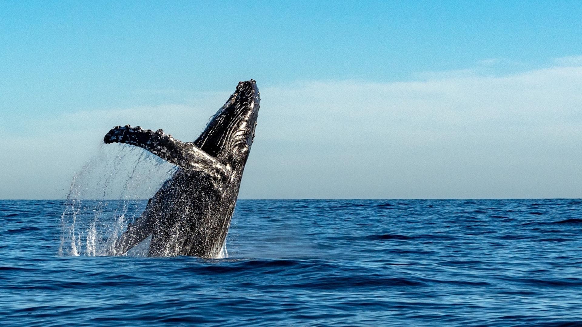 Protegiendo el ecosistema del Archipiélago de Humboldt
