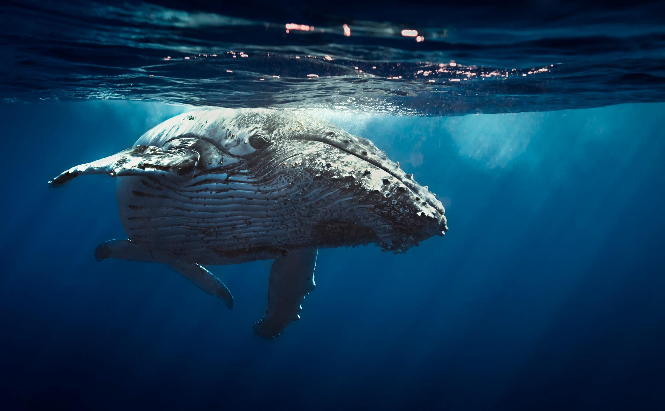 Una historia de leones marinos y ballenas