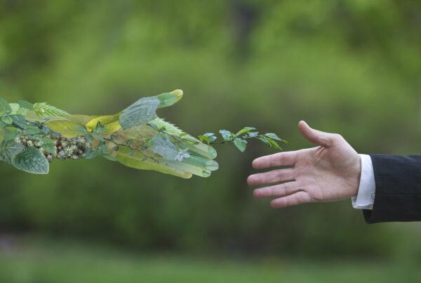 Economia de futuro, sosnible y eficiente green economy